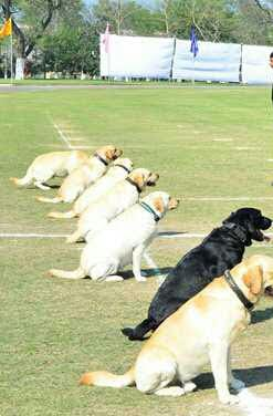 Expert Sniffer dog in India