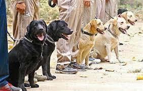 sniffer-dog-security-mumbai