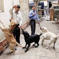 sniffer-dog-security-delhi-india