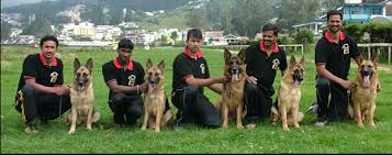 trained-certified-dog-security-with-handlers